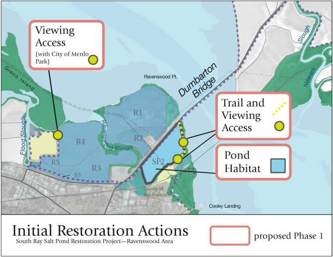 South Bay Salt Pond Restoration Efforts Accelerating